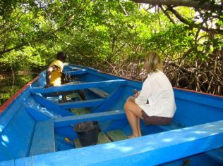 Mangrove boat trip