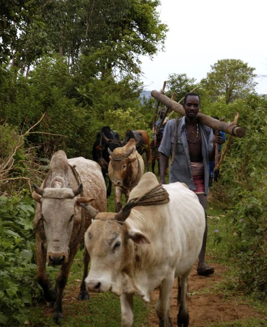 Village life - work in the fields