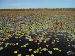 Billabong at South Alligator