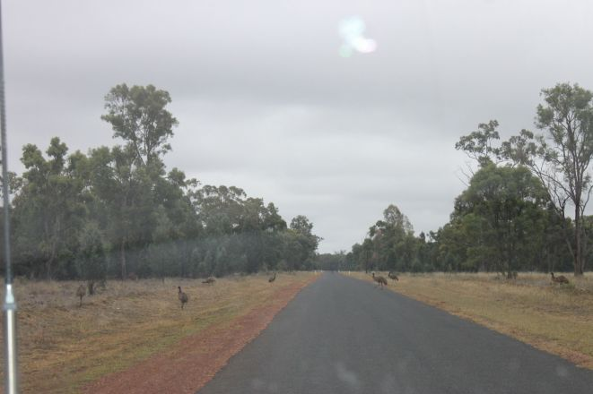 Straight roads and emus