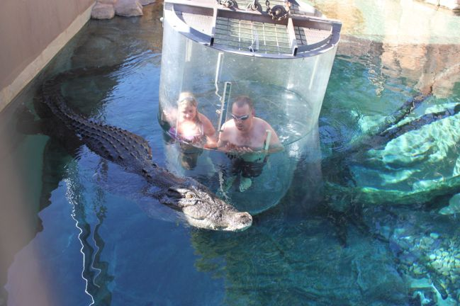 The cage of death - swimming with the crocs