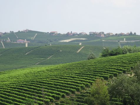 Vineyards from Barolo