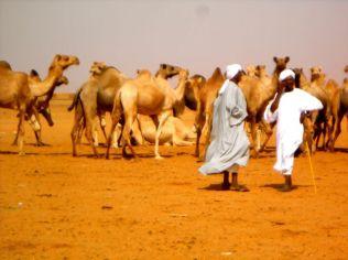 Camel market in Khartoum