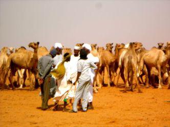 Camel market in Khatroum