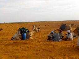Our camel men