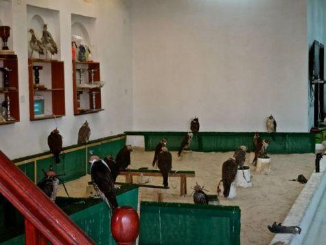 Falcon Shop