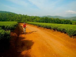 Tea estate cycling