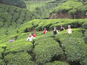 Girls amongst the tea