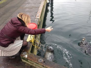 Feeding the seals in Victoria Harbour