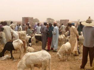 Sheep/goat market