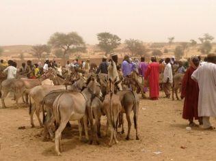 Donkey market, Zinder