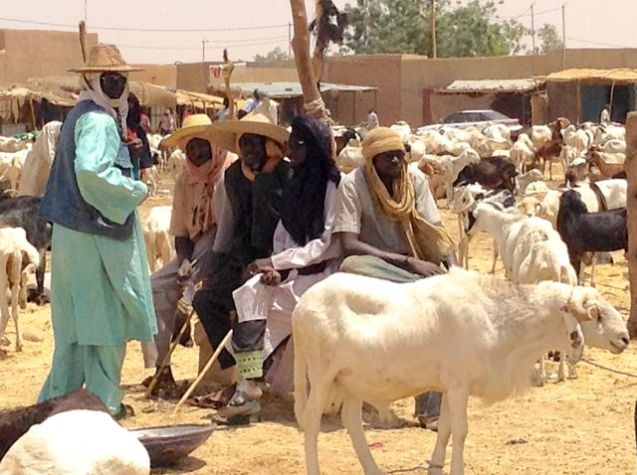 Agadez animal market