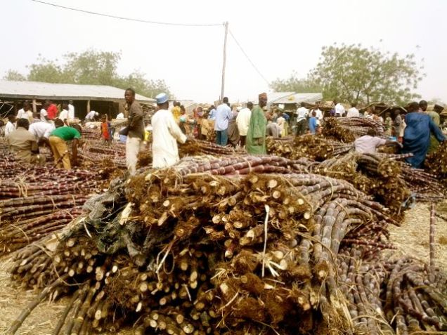 Sugarcane at Zinder market