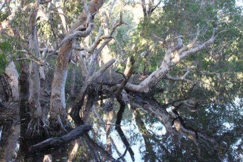 Some Aussie bush