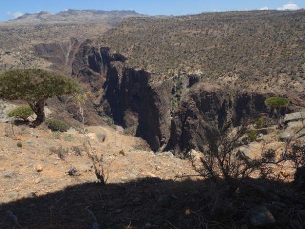 Socotran interior