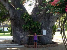 Enormous Baobab tree